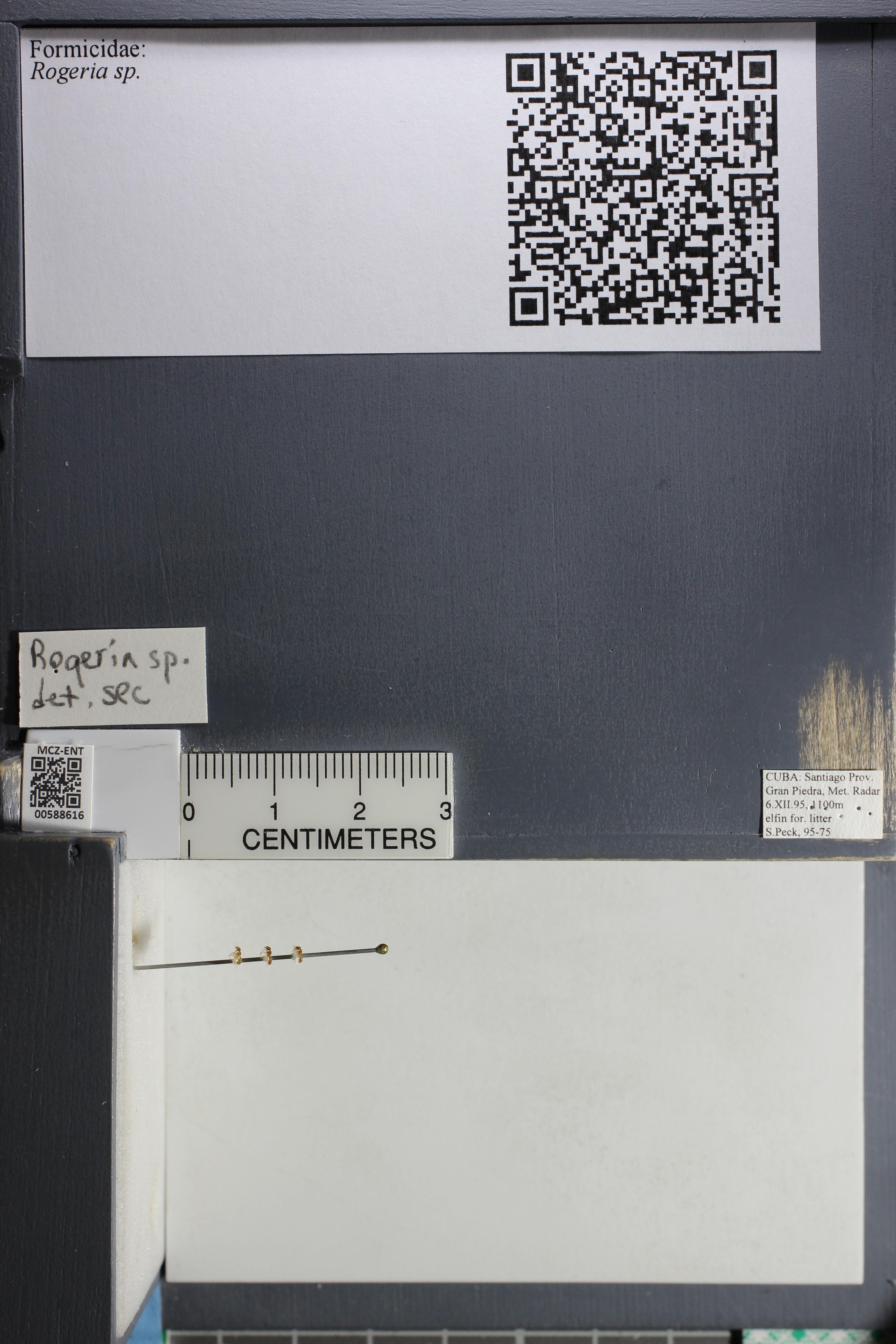 http://mczbase.mcz.harvard.edu/specimen_images/ent-formicidae/datashot/2015_11_24/IMG_340576.JPG