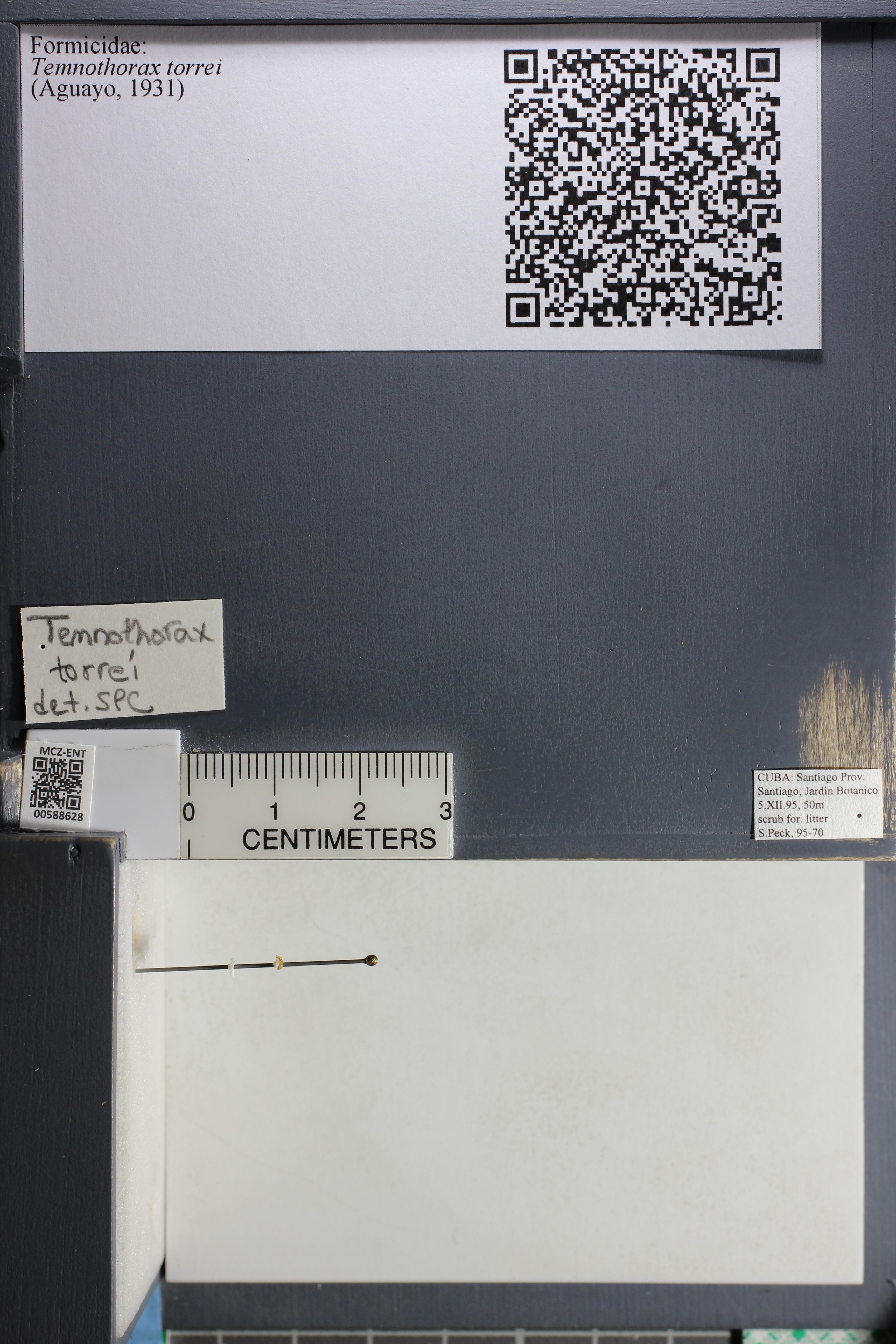 http://mczbase.mcz.harvard.edu/specimen_images/ent-formicidae/datashot/2015_11_24/IMG_340588.JPG