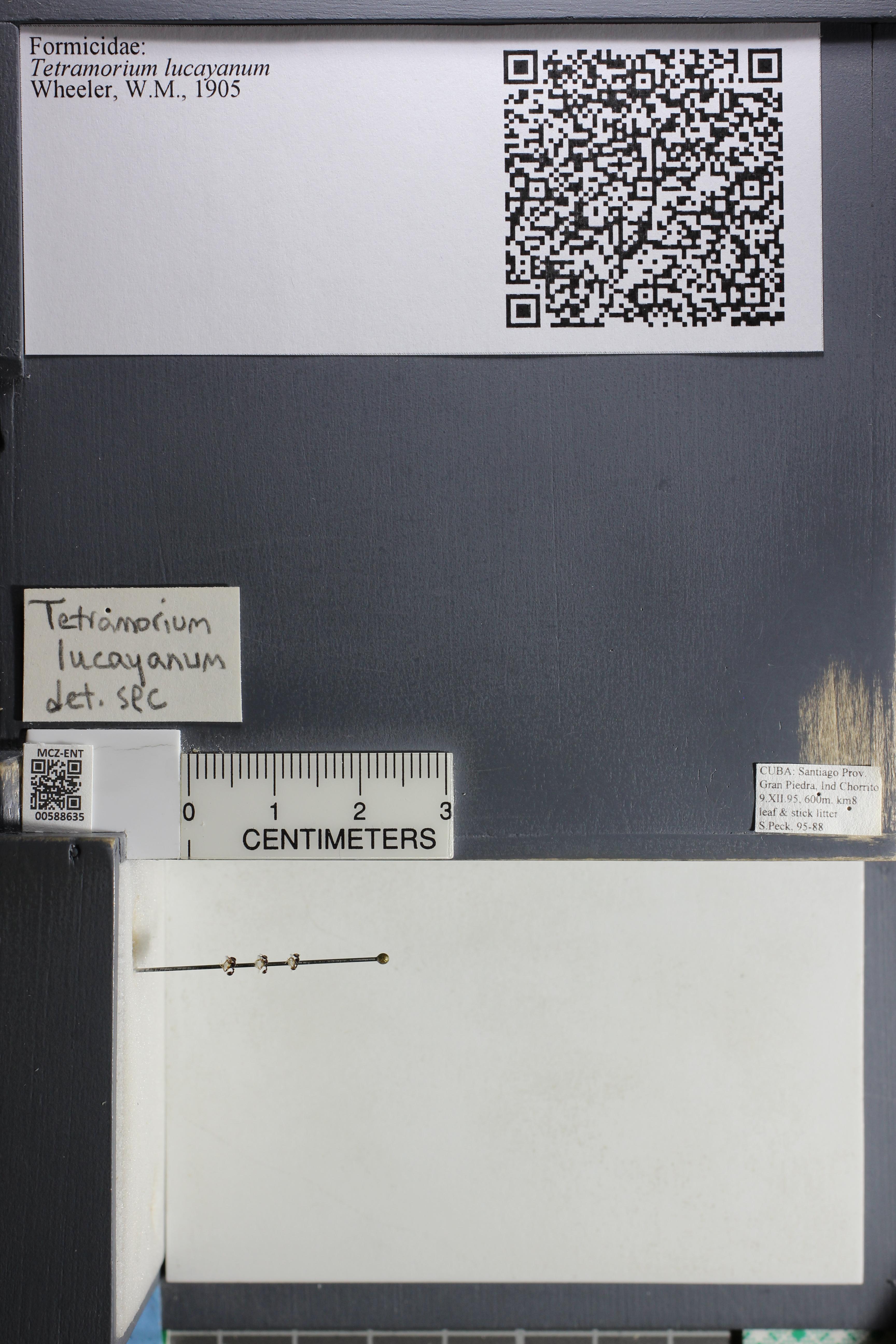 http://mczbase.mcz.harvard.edu/specimen_images/ent-formicidae/datashot/2015_11_24/IMG_340595.JPG