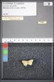 http://mczbase.mcz.harvard.edu/specimen_images/ent-lepidoptera/images/2009_05_08/IMG_002631.JPG