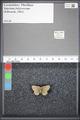 http://mczbase.mcz.harvard.edu/specimen_images/ent-lepidoptera/images/2009_05_08/IMG_002692.JPG