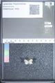 http://mczbase.mcz.harvard.edu/specimen_images/ent-lepidoptera/images/2009_08_31/IMG_016815.JPG