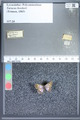 http://mczbase.mcz.harvard.edu/specimen_images/ent-lepidoptera/images/2009_09_21/IMG_017505.JPG