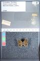 http://mczbase.mcz.harvard.edu/specimen_images/ent-lepidoptera/images/2009_09_29/IMG_019600.JPG