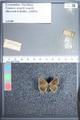 http://mczbase.mcz.harvard.edu/specimen_images/ent-lepidoptera/images/2009_09_29/IMG_019601.JPG