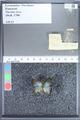 http://mczbase.mcz.harvard.edu/specimen_images/ent-lepidoptera/images/2009_09_29/IMG_019833.JPG
