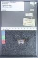 http://mczbase.mcz.harvard.edu/specimen_images/ent-lepidoptera/images/2009_10_01/IMG_020370.JPG