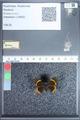 http://mczbase.mcz.harvard.edu/specimen_images/ent-lepidoptera/images/2009_11_10/IMG_026748.JPG
