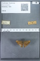 http://mczbase.mcz.harvard.edu/specimen_images/ent-lepidoptera/images/2009_12_16/IMG_027137.JPG
