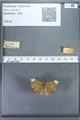 http://mczbase.mcz.harvard.edu/specimen_images/ent-lepidoptera/images/2009_12_16/IMG_027138.JPG
