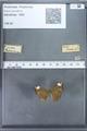 http://mczbase.mcz.harvard.edu/specimen_images/ent-lepidoptera/images/2009_12_16/IMG_027139.JPG