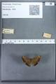 http://mczbase.mcz.harvard.edu/specimen_images/ent-lepidoptera/images/2009_12_16/IMG_027141.JPG