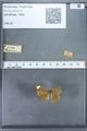 http://mczbase.mcz.harvard.edu/specimen_images/ent-lepidoptera/images/2009_12_16/IMG_027142.JPG
