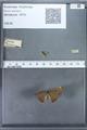 http://mczbase.mcz.harvard.edu/specimen_images/ent-lepidoptera/images/2009_12_16/IMG_027145.JPG