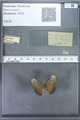 http://mczbase.mcz.harvard.edu/specimen_images/ent-lepidoptera/images/2009_12_16/IMG_027147.JPG