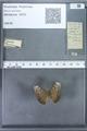 http://mczbase.mcz.harvard.edu/specimen_images/ent-lepidoptera/images/2009_12_16/IMG_027148.JPG