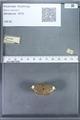 http://mczbase.mcz.harvard.edu/specimen_images/ent-lepidoptera/images/2009_12_16/IMG_027150.JPG