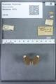 http://mczbase.mcz.harvard.edu/specimen_images/ent-lepidoptera/images/2009_12_16/IMG_027151.JPG