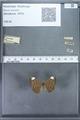 http://mczbase.mcz.harvard.edu/specimen_images/ent-lepidoptera/images/2009_12_16/IMG_027152.JPG
