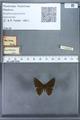 http://mczbase.mcz.harvard.edu/specimen_images/ent-lepidoptera/images/2009_12_16/IMG_027155.JPG