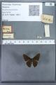 http://mczbase.mcz.harvard.edu/specimen_images/ent-lepidoptera/images/2009_12_16/IMG_027157.JPG