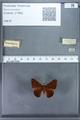 http://mczbase.mcz.harvard.edu/specimen_images/ent-lepidoptera/images/2009_12_16/IMG_027160.JPG