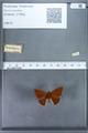 http://mczbase.mcz.harvard.edu/specimen_images/ent-lepidoptera/images/2009_12_16/IMG_027161.JPG
