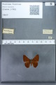http://mczbase.mcz.harvard.edu/specimen_images/ent-lepidoptera/images/2009_12_16/IMG_027162.JPG
