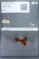 http://mczbase.mcz.harvard.edu/specimen_images/ent-lepidoptera/images/2009_12_16/IMG_027164.JPG
