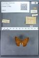 http://mczbase.mcz.harvard.edu/specimen_images/ent-lepidoptera/images/2009_12_16/IMG_027165.JPG