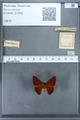 http://mczbase.mcz.harvard.edu/specimen_images/ent-lepidoptera/images/2009_12_16/IMG_027166.JPG