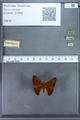 http://mczbase.mcz.harvard.edu/specimen_images/ent-lepidoptera/images/2009_12_16/IMG_027167.JPG