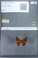 http://mczbase.mcz.harvard.edu/specimen_images/ent-lepidoptera/images/2009_12_16/IMG_027168.JPG