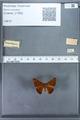 http://mczbase.mcz.harvard.edu/specimen_images/ent-lepidoptera/images/2009_12_16/IMG_027169.JPG