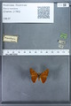 http://mczbase.mcz.harvard.edu/specimen_images/ent-lepidoptera/images/2009_12_16/IMG_027170.JPG