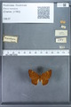 http://mczbase.mcz.harvard.edu/specimen_images/ent-lepidoptera/images/2009_12_16/IMG_027171.JPG