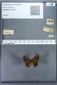 http://mczbase.mcz.harvard.edu/specimen_images/ent-lepidoptera/images/2009_12_16/IMG_027175.JPG