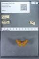http://mczbase.mcz.harvard.edu/specimen_images/ent-lepidoptera/images/2009_12_16/IMG_027179.JPG
