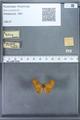 http://mczbase.mcz.harvard.edu/specimen_images/ent-lepidoptera/images/2009_12_16/IMG_027180.JPG