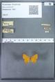 http://mczbase.mcz.harvard.edu/specimen_images/ent-lepidoptera/images/2009_12_16/IMG_027181.JPG