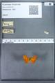 http://mczbase.mcz.harvard.edu/specimen_images/ent-lepidoptera/images/2009_12_16/IMG_027182.JPG