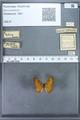 http://mczbase.mcz.harvard.edu/specimen_images/ent-lepidoptera/images/2009_12_16/IMG_027184.JPG
