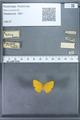 http://mczbase.mcz.harvard.edu/specimen_images/ent-lepidoptera/images/2009_12_16/IMG_027185.JPG