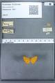 http://mczbase.mcz.harvard.edu/specimen_images/ent-lepidoptera/images/2009_12_16/IMG_027186.JPG