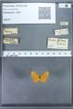 http://mczbase.mcz.harvard.edu/specimen_images/ent-lepidoptera/images/2009_12_16/IMG_027189.JPG