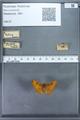 http://mczbase.mcz.harvard.edu/specimen_images/ent-lepidoptera/images/2009_12_16/IMG_027190.JPG