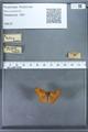 http://mczbase.mcz.harvard.edu/specimen_images/ent-lepidoptera/images/2009_12_16/IMG_027191.JPG