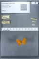http://mczbase.mcz.harvard.edu/specimen_images/ent-lepidoptera/images/2009_12_16/IMG_027193.JPG