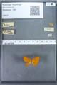 http://mczbase.mcz.harvard.edu/specimen_images/ent-lepidoptera/images/2009_12_16/IMG_027194.JPG