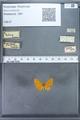 http://mczbase.mcz.harvard.edu/specimen_images/ent-lepidoptera/images/2009_12_16/IMG_027195.JPG